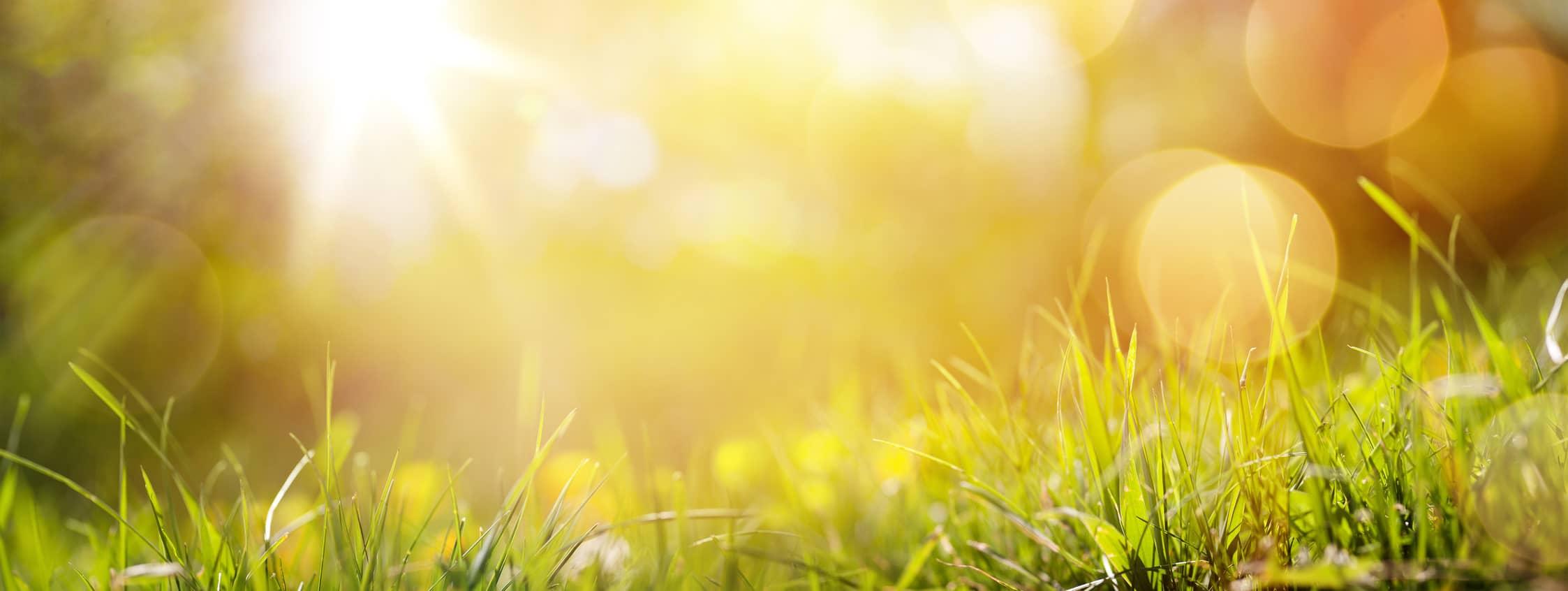 Sonne und Rasen Vitamin K Tropfen
